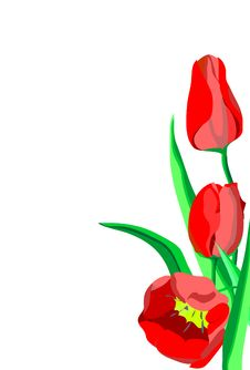 Three Bright Red Flowers Tulips With Green Leaves Stock Images