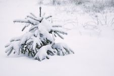 Free Fur-tree Under Snow Stock Photography - 14057482