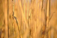 Free Abstract Field Stock Photos - 14057513