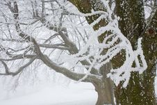 Free Hoar Frost On Branches Stock Photo - 14057580