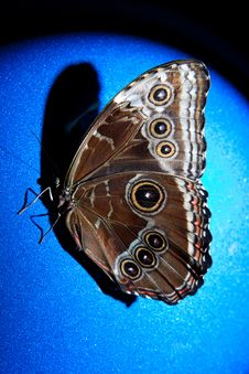 Free Textured Butterfly Royalty Free Stock Photography - 14058147
