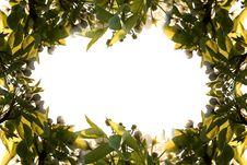 Free Flower Frame Stock Images - 14058294