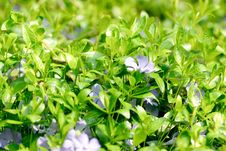 Free Green Leaf And Flowers. Spring Background. Royalty Free Stock Photo - 14058975