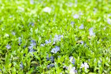 Free Green Leaf And Flowers. Spring Background. Stock Photos - 14059093