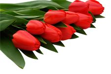 Free Red Tulips Royalty Free Stock Images - 14059219