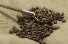 Free Coffee Beans Stock Photo - 14059220