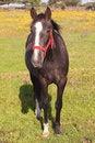 Free Nice Horse Royalty Free Stock Photos - 14061748