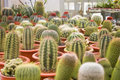 Free Cactus Royalty Free Stock Images - 14067999