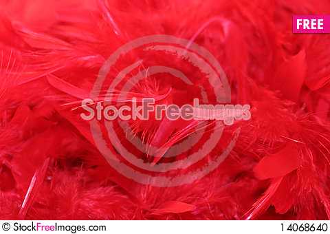Free Red Feathers Stock Photo - 14068640
