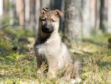 Free Puppy Alone In The Forest Royalty Free Stock Images - 14060309