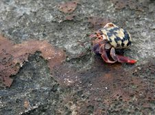 Free Hermit Crab Royalty Free Stock Photo - 14060545