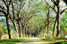 Free Public Park In Langkawi Royalty Free Stock Image - 14063056