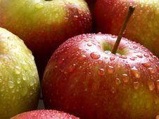 Free Apple Stock Photos - 14064113