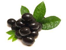 Free Olives Royalty Free Stock Image - 14064326