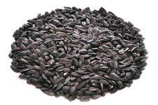 Free Sunflower Seeds Stock Image - 14064831