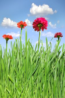 Free Green Grass And  Flowers Stock Photos - 14065183