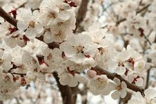 Free Spring. Stock Image - 14065951