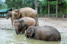 Free Elephant Stock Images - 14066984
