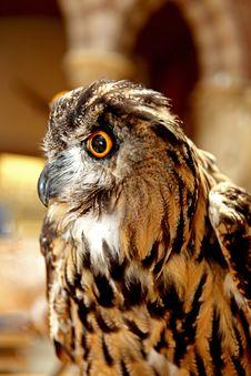 Free Owl Royalty Free Stock Image - 14068276