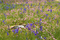 Free Field Of Spring Flowers Royalty Free Stock Image - 14074746
