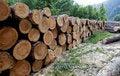 Free Wood Stock Image - 14076491