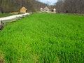 Free George Washington - Pioneer Farmer Site Stock Photography - 14076922