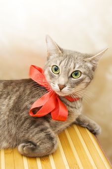 Free Smoky Cat With Red Bow Stock Photos - 14072023