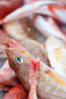 Free Red Fish In Market Royalty Free Stock Images - 14073969