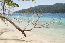 Free Trees On The Beach Royalty Free Stock Image - 14074176
