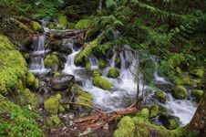 Free Creek In The Forest Royalty Free Stock Images - 14075079