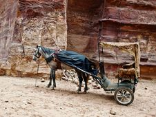 Petra In Jordan Pony And Carriage