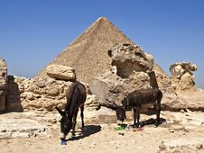 Free Pyramids In Cairo Egypt And Two Donkeys Stock Image - 14075691