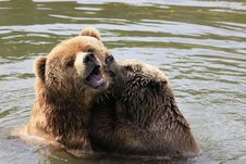 Free Brown Bear Stock Photo - 14075820