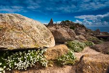 Alyssum Rocks At Monterey Royalty Free Stock Photo