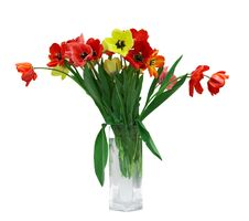 Free Red And Yellow Tulips Stock Photography - 14076262