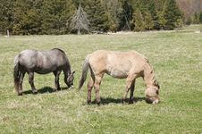 Pair Of Horses Royalty Free Stock Image