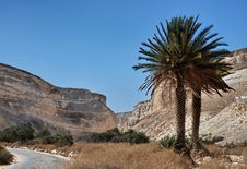 Free Desert Of Negev Stock Image - 14077581