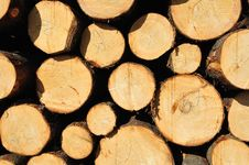 Free Pile Of Wood Stock Photo - 14078030