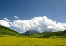 Free Rape Field Royalty Free Stock Images - 14078079
