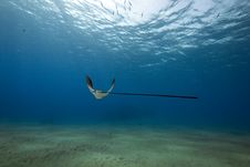 Free Eagle Ray, Sun And Ocean Stock Photo - 14078100