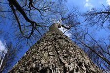 Free Tree Stock Photos - 14079493