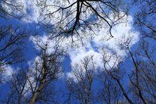 Free Tree Stock Photos - 14079513