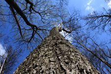 Free Tree Stock Photography - 14079532