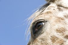 Free Close Up Of Horses Eye Stock Image - 14079761