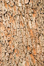 Free Close Up Of Wood Bark Texture Stock Photography - 14080142