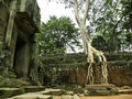 Free Big Tree Royalty Free Stock Photo - 14081635