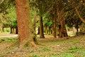 Free Park Trees Royalty Free Stock Photo - 14085895