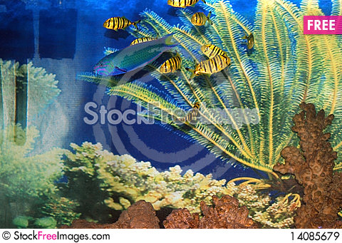 Free Fish Royalty Free Stock Images - 14085679
