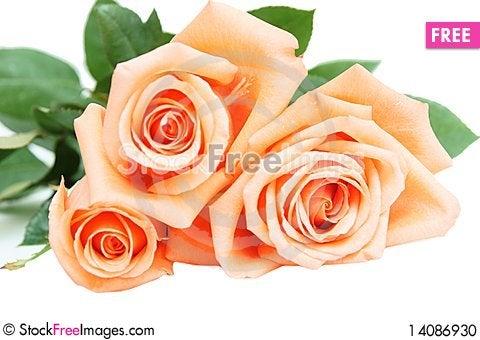 Free Roses Stock Photo - 14086930