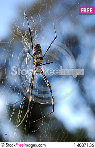 Free Spider Royalty Free Stock Image - 14087136